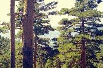drzewa, las